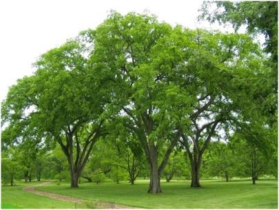 overgrown trees